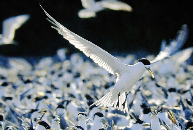 South China Sea Birds