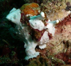 лягушки рыбы
